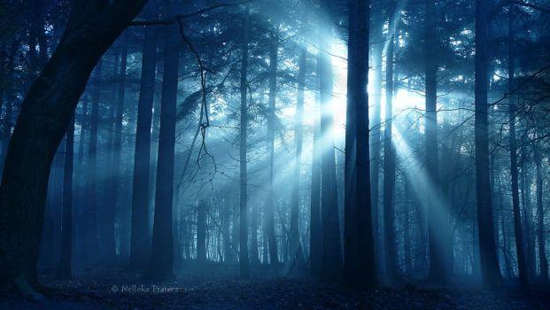 shadowlight_by_nelleke-d74lxtt.png