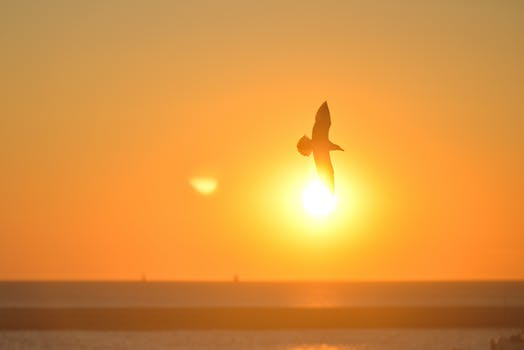 sunset-bird-sunrise-animal